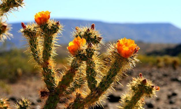 The Top 10 Most Beautiful Deserts In The World