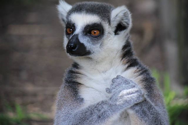 The Top 10 Most Beautiful Endangered Animals In The World
